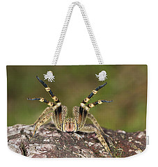 Wandering Spider In Defensive Posture Weekender Tote Bag by Konrad Wothe
