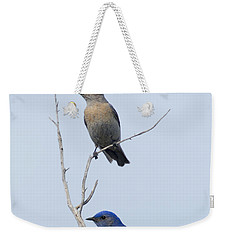 Western Bluebird Pair Weekender Tote Bag by Mike  Dawson