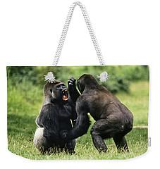 Western Lowland Gorilla Males Fighting Weekender Tote Bag by Konrad Wothe