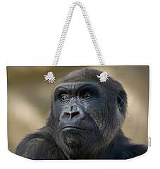 Western Lowland Gorilla Portrait Weekender Tote Bag by San Diego Zoo