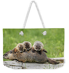 Woodchuck Carrying Young Minnesota Weekender Tote Bag by Jurgen & Christine Sohns