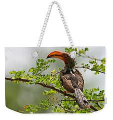 Yellow-billed Hornbill Weekender Tote Bag by Bruce J Robinson