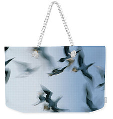 Blue-footed Booby Sula Nebouxii Flock Weekender Tote Bag by Winfried Wisniewski