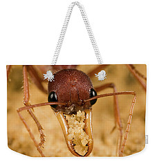 Bulldog Ant Myrmecia Gulosa Worker Weekender Tote Bag by Mark Moffett