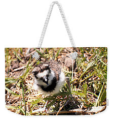 Just Hatched - Killdeer Weekender Tote Bag by Angie Rea
