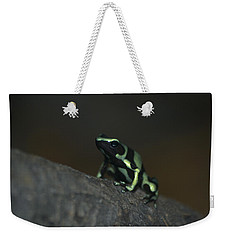 Poisonous Green Frog 03 Weekender Tote Bag by Thomas Woolworth