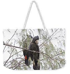 Red Tailed Black Cockatoos Weekender Tote Bag by Douglas Barnard