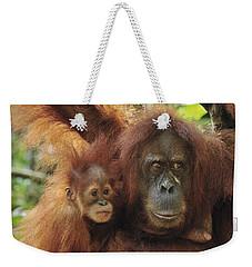 Sumatran Orangutan Pongo Abelii Mother Weekender Tote Bag by Thomas Marent