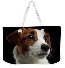 Closeup Portrait Of Jack Russell Terrier Dog On Black Weekender Tote Bag by Sergey Taran