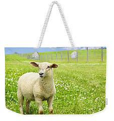 Cute Young Sheep Weekender Tote Bag by Elena Elisseeva