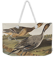 Pin-tailed Duck Weekender Tote Bag by John James Audubon
