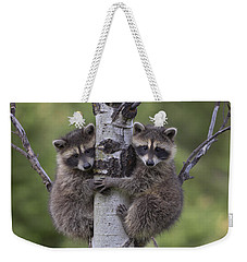Raccoon Two Babies Climbing Tree North Weekender Tote Bag by Tim Fitzharris