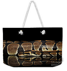 Ball Or Royal Python Snake On Isolated Black Background Weekender Tote Bag by Sergey Taran