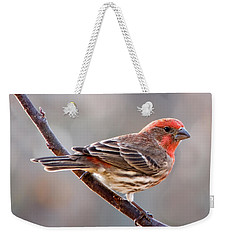 House Finch Weekender Tote Bag by Betty LaRue