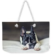 Boston Terrier Puppy Weekender Tote Bag by Nailia Schwarz