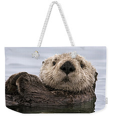 Sea Otter Elkhorn Slough Monterey Bay Weekender Tote Bag by Sebastian Kennerknecht