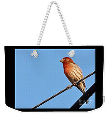 American Crossbill On Wire     Spring   Indiana   Weekender Tote Bag by Rory Cubel