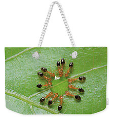 Ant Monomorium Intrudens Group Drinking Weekender Tote Bag by Takashi Shinkai
