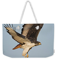 Augur Buzzard Buteo Augur Flying Weekender Tote Bag by Panoramic Images