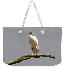 Australian White Ibis Perched Weekender Tote Bag by Mike  Dawson