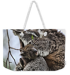 Baby Koala V2 Weekender Tote Bag by Douglas Barnard