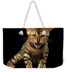Bengal Kitty Stands And Hissing On Black Weekender Tote Bag by Sergey Taran