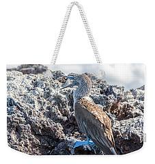 Blue Footed Booby Weekender Tote Bag by Jess Kraft
