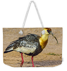 Buff-necked Ibis Weekender Tote Bag by Tony Beck