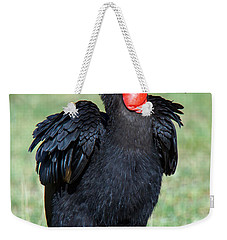 Close-up Of Ground Hornbill Bucorvidae Weekender Tote Bag by Panoramic Images