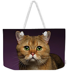 Closeup Golden British Cat With  Green Eyes On Purple  Weekender Tote Bag by Sergey Taran