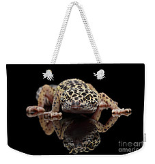 Closeup Leopard Gecko Eublepharis Macularius Isolated On Black Background, Front View Weekender Tote Bag by Sergey Taran