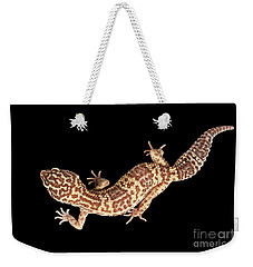 Closeup Leopard Gecko Eublepharis Macularius Isolated On Black Background Weekender Tote Bag by Sergey Taran