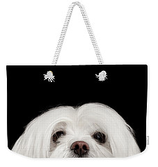 Closeup Nosey White Maltese Dog Looking In Camera Isolated On Black Background Weekender Tote Bag by Sergey Taran