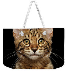 Closeup Portrait Of Bengal Kitty Isolated Black Background Weekender Tote Bag by Sergey Taran