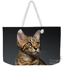 Closeup Portrait Of Bengal Male Kitty On Dark Background Weekender Tote Bag by Sergey Taran