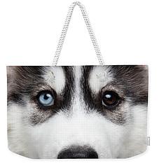 Closeup Siberian Husky Puppy Different Eyes Weekender Tote Bag by Sergey Taran
