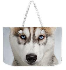 Closeup Siberian Husky Puppy With Blue Eyes On White  Weekender Tote Bag by Sergey Taran