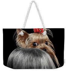 Closeup Yorkshire Terrier Dog, Long Groomed Hair Pity Looking Back Weekender Tote Bag by Sergey Taran