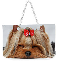 Closeup Yorkshire Terrier Dog With Closed Eyes Lying On White  Weekender Tote Bag by Sergey Taran