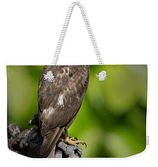 Common Buzzard Buteo Buteo, Bandhavgarh Weekender Tote Bag by Panoramic Images
