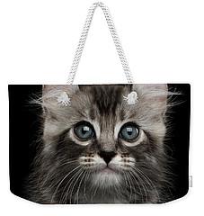 Cute American Curl Kitten With Twisted Ears Isolated Black Background Weekender Tote Bag by Sergey Taran