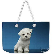 Cute Pure White Maltese Puppy Standing And Curiously Looking In Camera Isolated On Blue Background Weekender Tote Bag by Sergey Taran