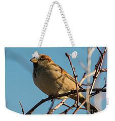 Female House Sparrow Weekender Tote Bag by Mike Dawson