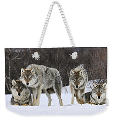 Gray Wolf Canis Lupus Group, Norway Weekender Tote Bag by Jasper Doest
