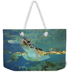 Green Sea Turtle Chelonia Mydas Weekender Tote Bag by Tim Fitzharris