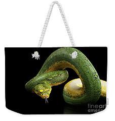 Green Tree Python. Morelia Viridis. Isolated Black Background Weekender Tote Bag by Sergey Taran