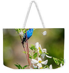 Indigo Bunting In Flowering Dogwood Weekender Tote Bag by Bill Wakeley