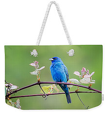 Indigo Bunting Perched Weekender Tote Bag by Bill Wakeley