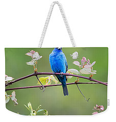 Indigo Bunting Perched Square Weekender Tote Bag by Bill Wakeley