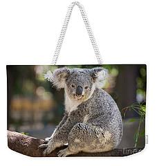 Koala In Tree Weekender Tote Bag by Jamie Pham